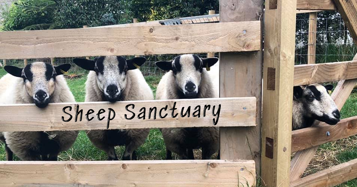 Sheep Sanctuary
